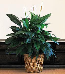 House Plants in Washington County NE