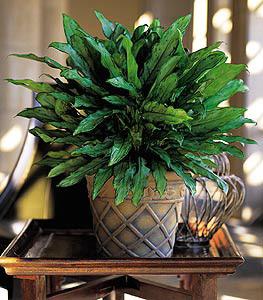 Office Plants in Washington County NE