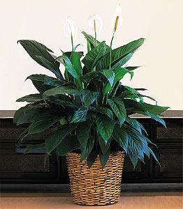 Plants14